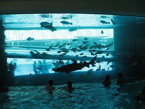 Al golden nugget hotel arriva il brivido del bagno con gli - Bagno con gli squali sudafrica ...
